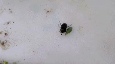 Big Shit On The Bug